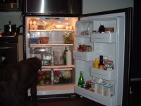 dog-in-fridge