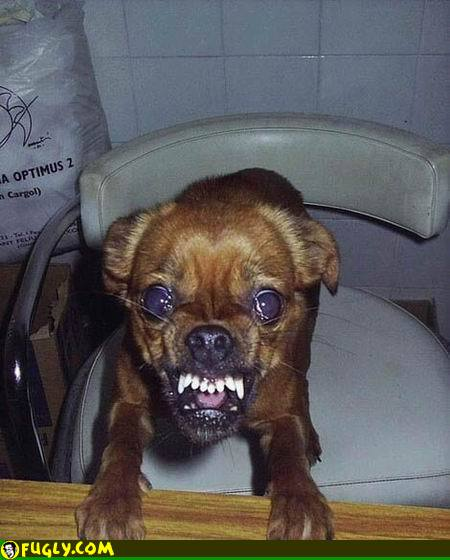 angry-demon-dog