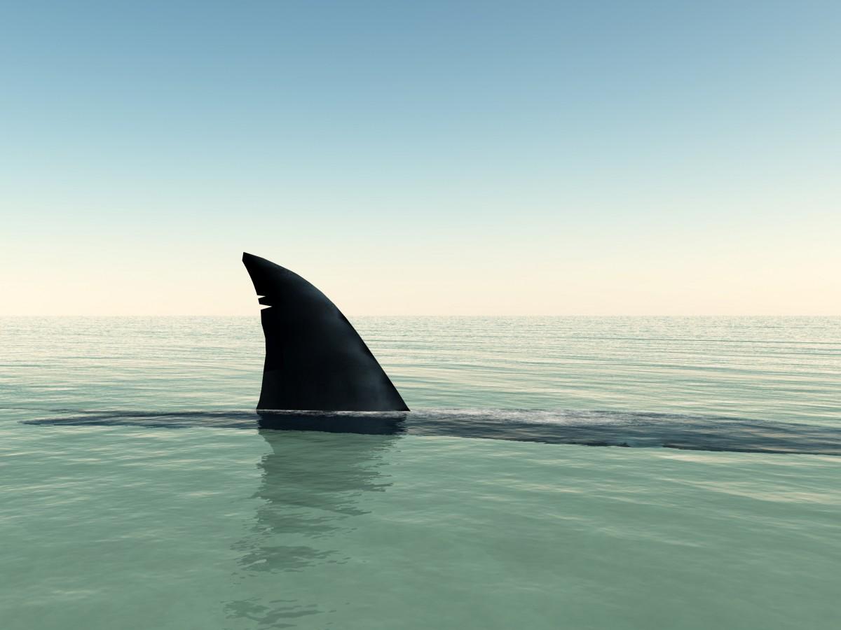 5 Secrets of a $450 Million Sales Shark