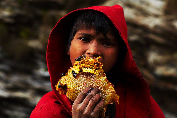 Twice each year, the Gurung tribe of West-Central Nepal make a journey up the Himalayas to harvest honey. Picture source.