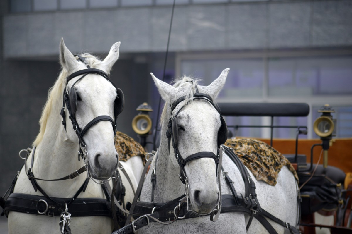 How to Remove the Financial Industry's Horse Blinders