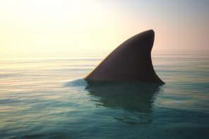 Why You Need Shark Habits in Your Life